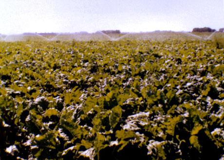 Nyugati Határ Cukorrépa Szövetkezet